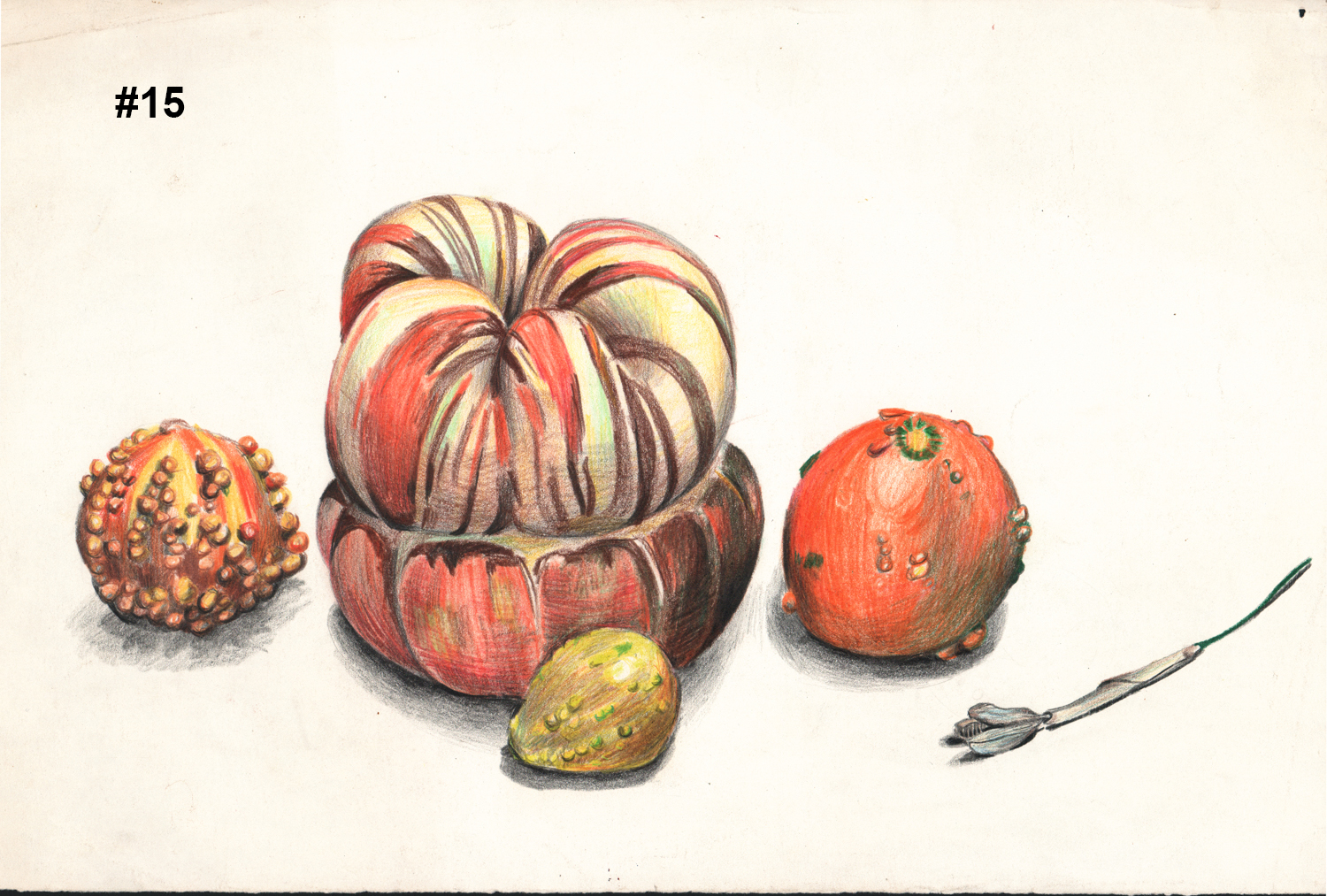 """#15 Untitled (Gourds) - Pencil Drawing - 11""""H x 17""""W"""