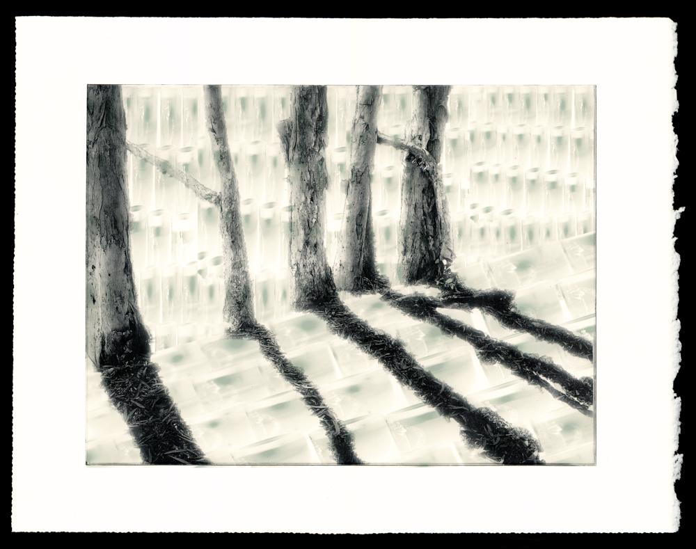 Melaleuca votivus -  Paperbark votives