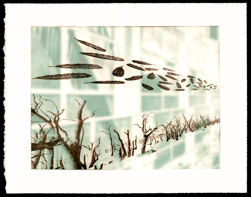 Stagnum luminarae - Swamp Windows
