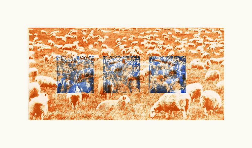 Adolescentia lanatae - Youth Sheep