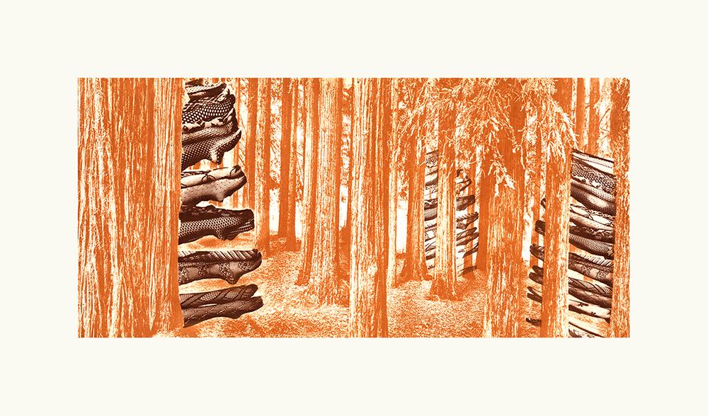 Lucas tibiae - Forest Legs