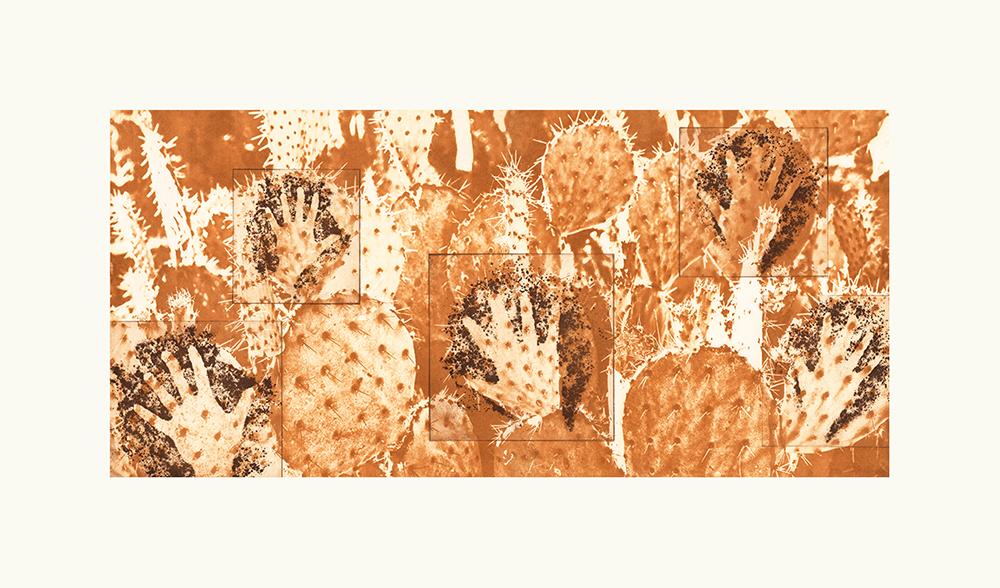 Optuntia maniculae - Cactus Hands