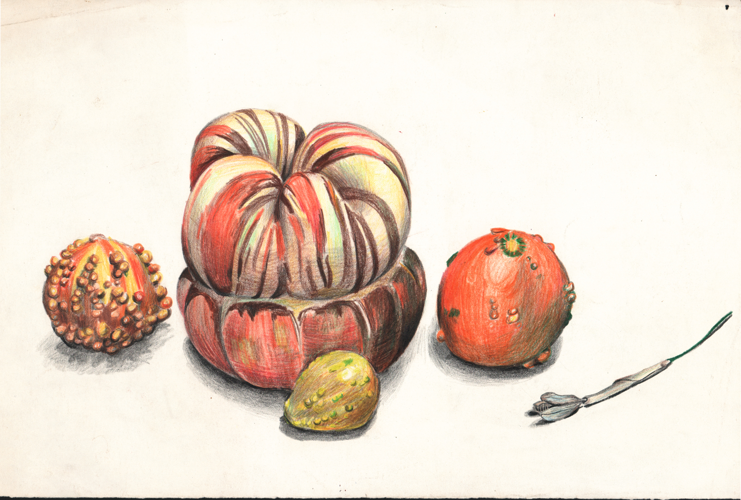 Untitled (Gourds) - Pencil Drawing - 11